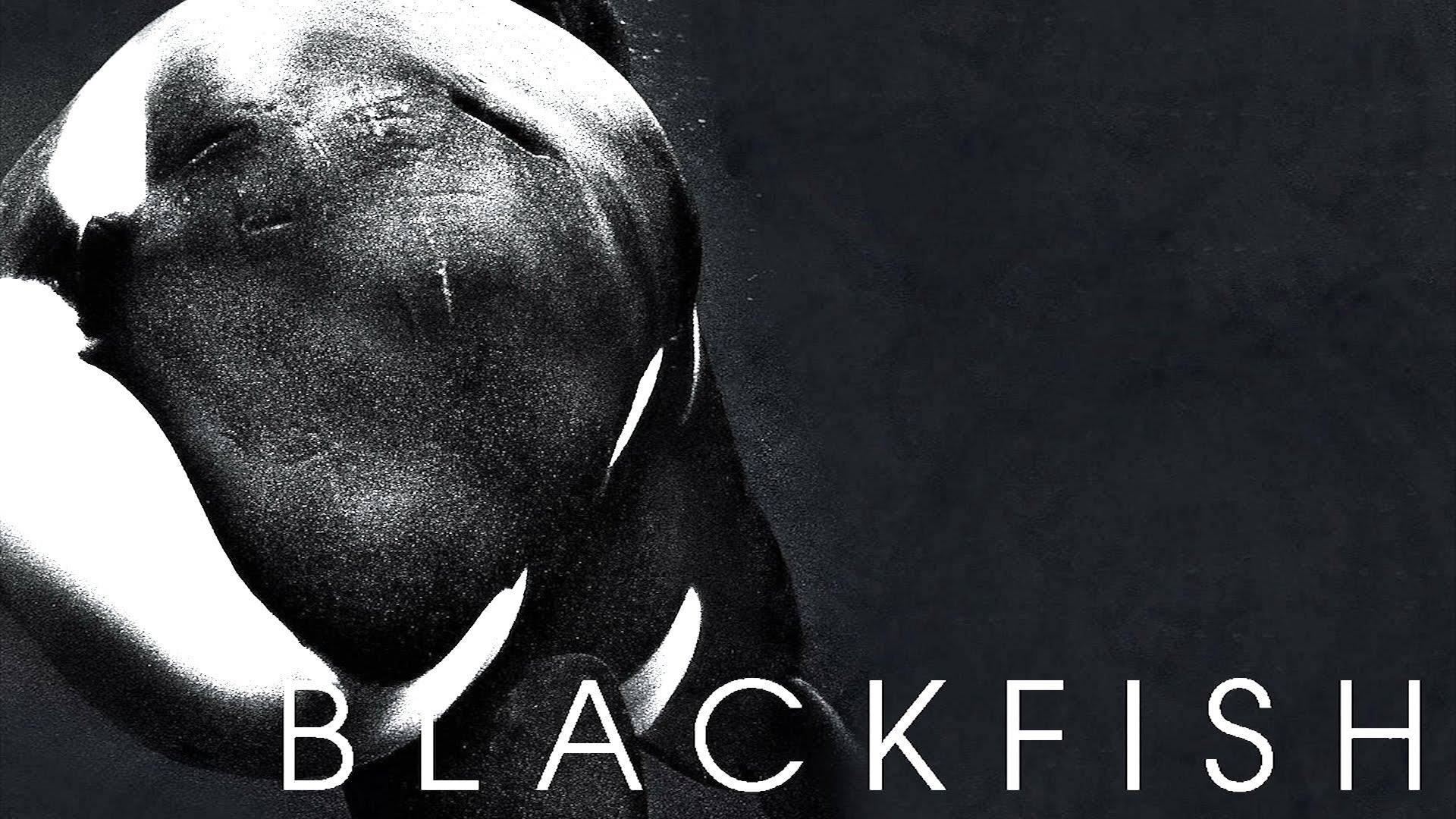 Cool Black Wallpaper Tim Zimmermann Co Author Amp Producer Of Blackfish Uvm Bored