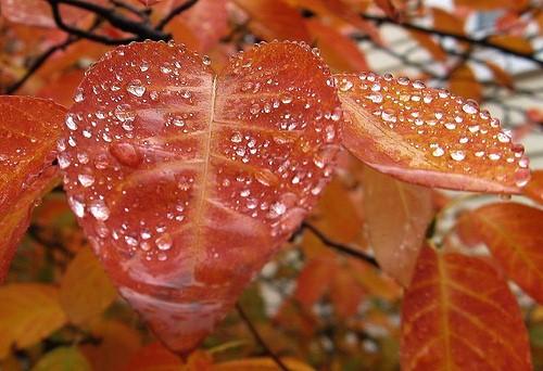 Cute Rainy Weather Wallpapers صور المطر صور الندى صور قوس قزح منتديات عبير