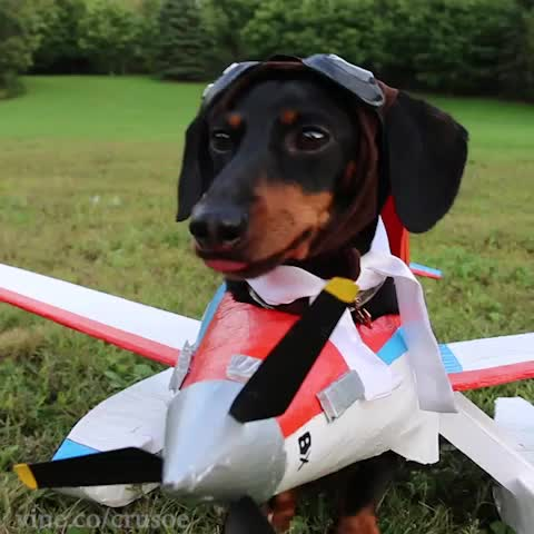 The Cars 2 Wallpaper Watch Crusoe Celebrity Dachshund S Vine Quot Ready For Takeoff ️ Quot