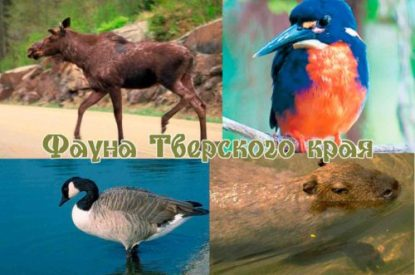 Фауна Тверского края