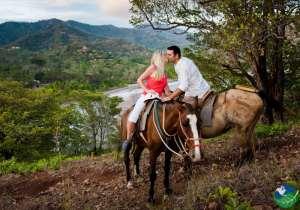 Honeymoon-Horse