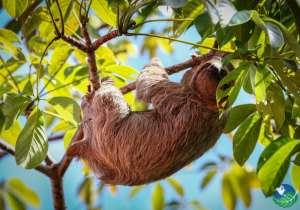 Manuel Antonio Costa Rica sloth