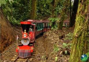 Monteverde Trainforest Tour