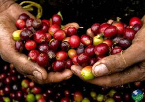Don Juan Coffee