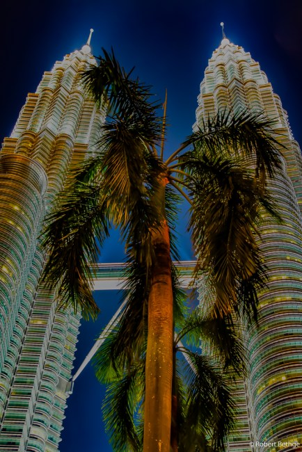 Palm in front of Petronas Towers at night