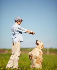 Curso Adestrador de Cães - Onde fazer Dicas 01