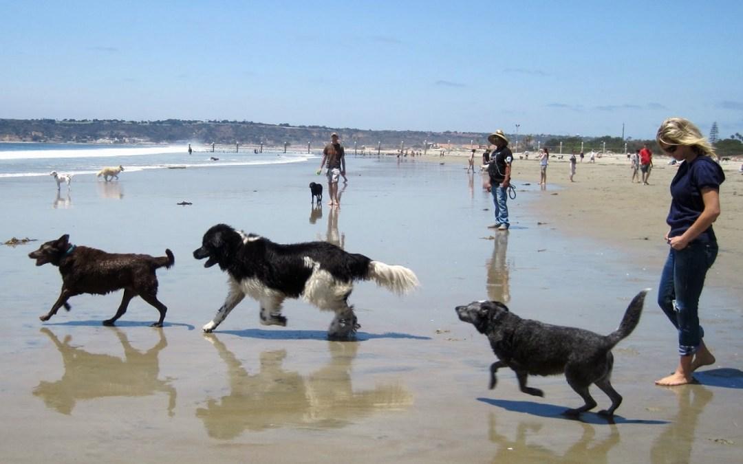 Playas para perros en la comunidad valenciana 2016 for Cabanas en los arboles comunidad valenciana