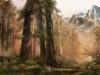 Wald, gemäßigtes Klima