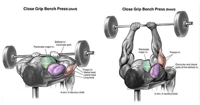Best Exercises To Build Amazing Triceps Valentin Bosioc