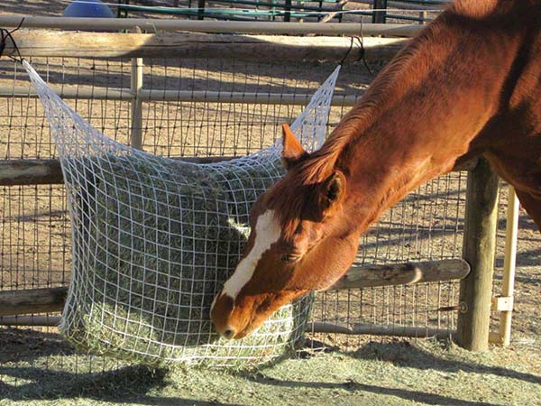 Feed Hay Extended Day Freedom Hay Feeder