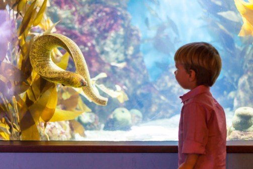 Max greeting one of the eels