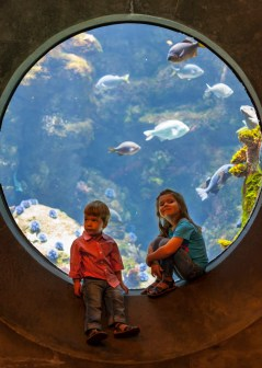 Adventure day with Dad at the California Academy of Sciences