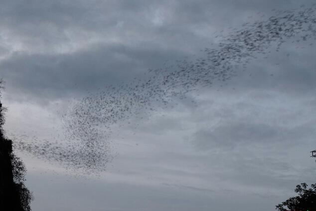 Bat cave. Miljoenen vleermuizen gaan rond zonsondergang op jacht. Toch waren er nog muggen over om ons te prikken.
