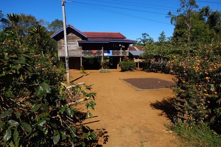 Koffieplantages op het Bolaven plateau