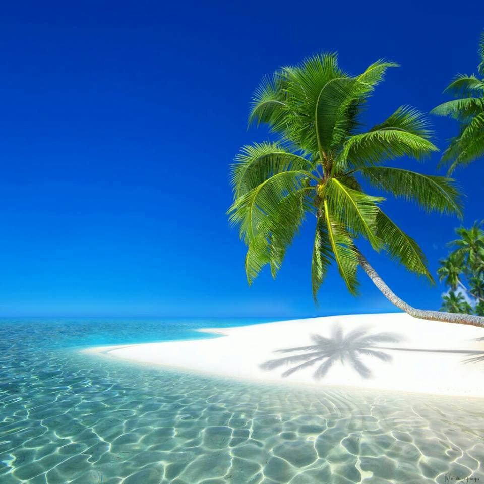 Tropical Ocean 3d Live Wallpaper Iles Paradisiaques