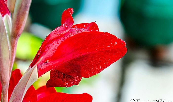 Raindrops On Petals – Vargis Khan