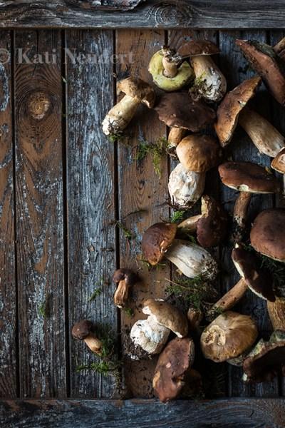 Frische Waldpilze auf Holzuntergrund.