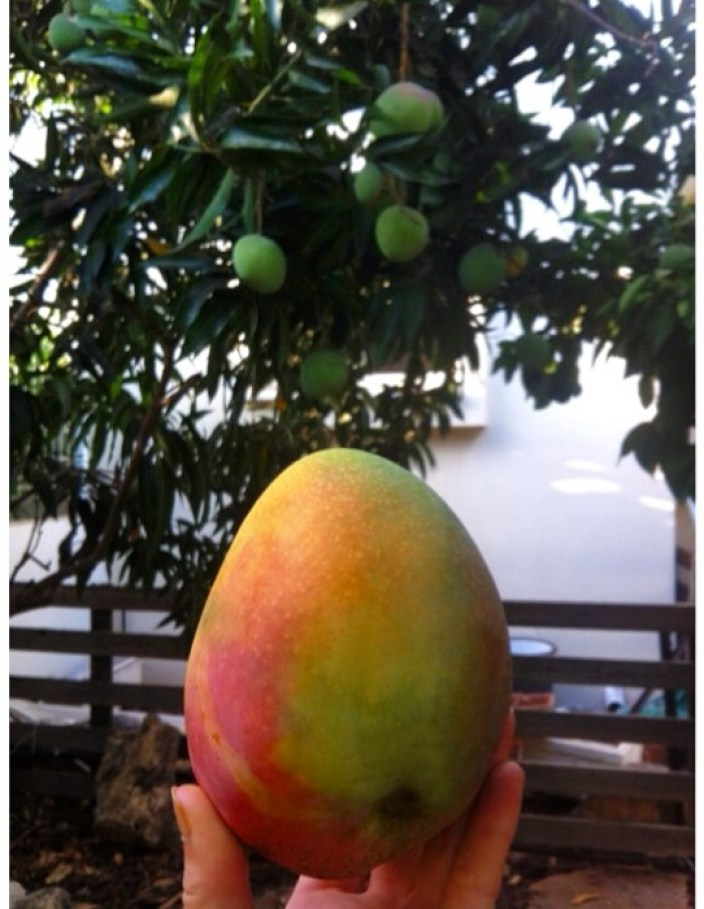MANGO ! Here comes the sun