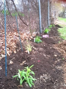 Native plants planted