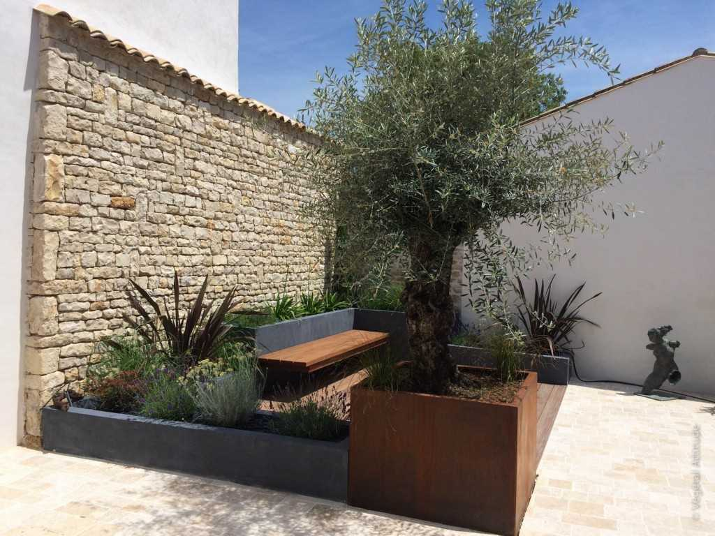 Bonsai Olivier Exterieur Amenagement Terrasse Cool Decoration Jardiniere