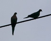 birdonwiresss
