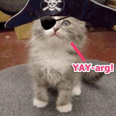 Cat-pirate