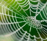 spider-web
