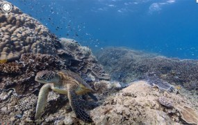 google-underwater-street-view