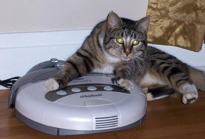 roomba-cat