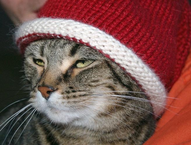 red-hat-openshift-enterprise