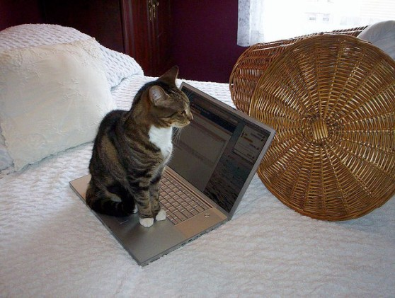 Even cats understand the value of blogging
