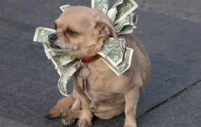 crowdfunding dog