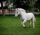 unicorn