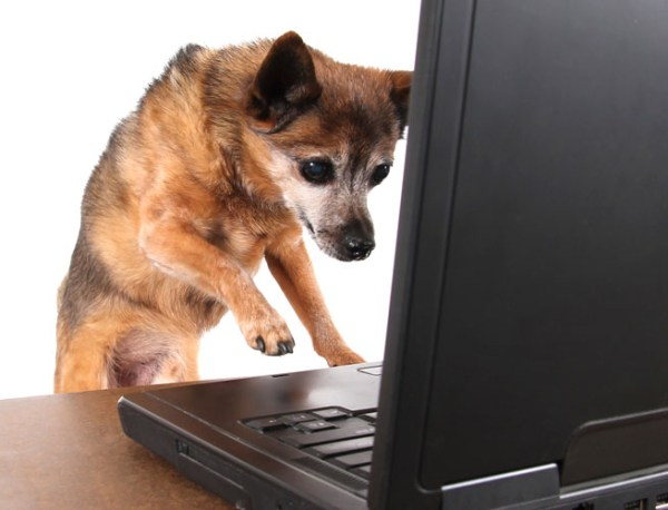 ss dog on computer