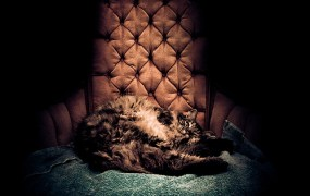 Fat cat sitting in a chair.