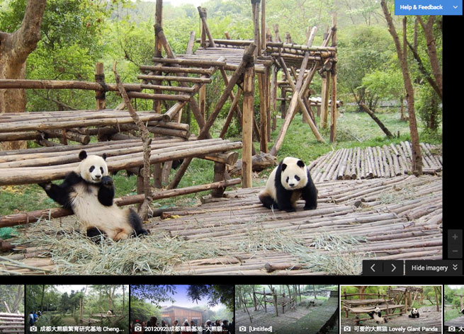 Google Goes Ga Ga For Animals Adds Zoo Imagery To Street