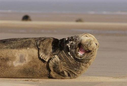 See how happy this guy is? Be more like him.