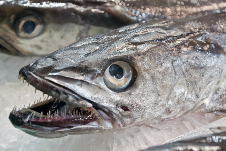 That's one scary-looking fish
