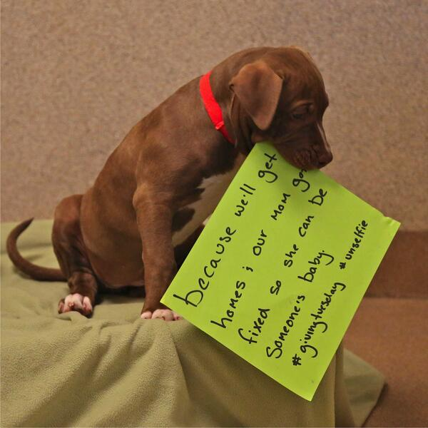 This puppy wants you to give more than 2% of your disposable income to charity.