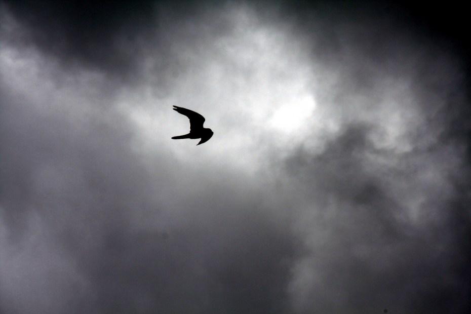 bird cloud phocks Flickr