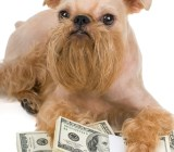 Dog guarding money