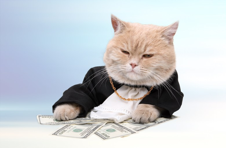 Funding daily cat