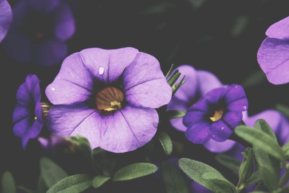 bloom-flowers