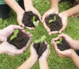 Growing plants paulaphoto Shutterstock