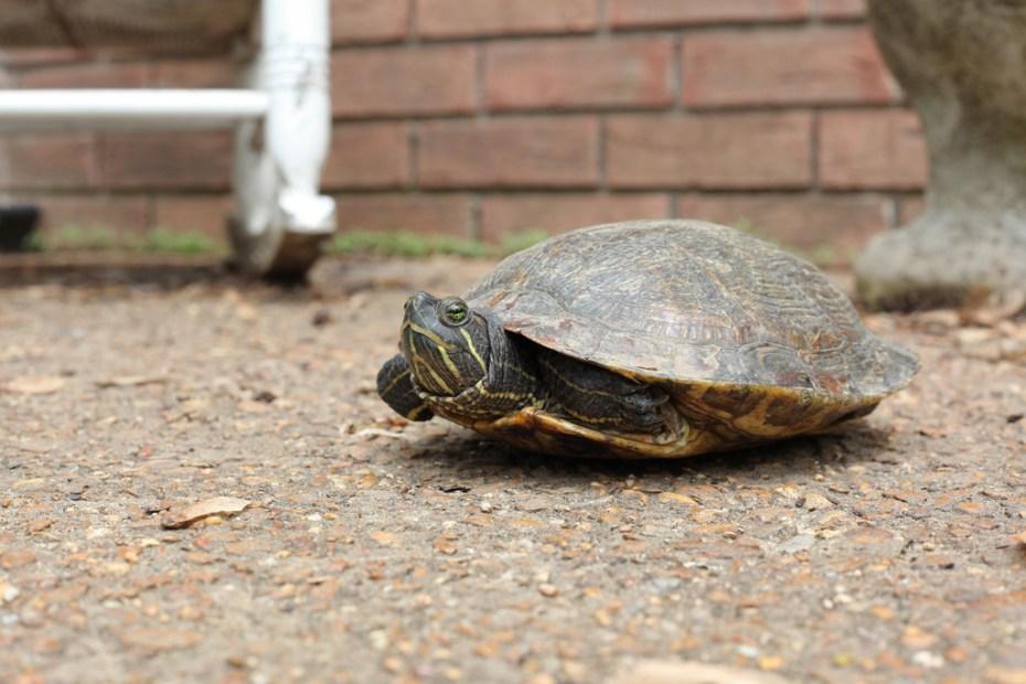 Turtle-slow