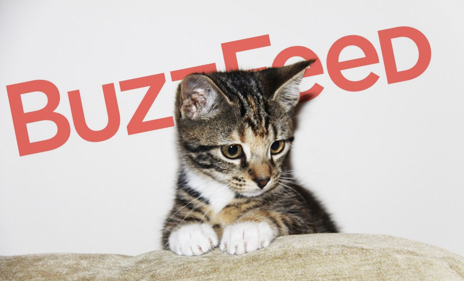 buzzfeed-cat-2