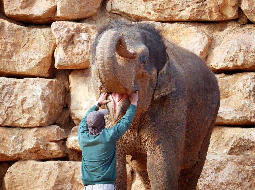 elephant man liza1979 shutterstock