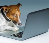 dog browsing on Net