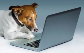dog browsing on Net