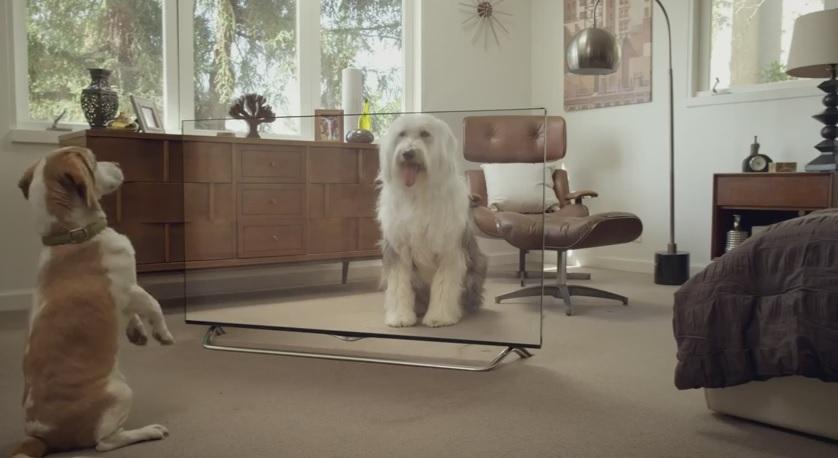 LG 4K TV fools a dog